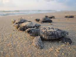Lifespan of a Turtle – What Do You Know About It?